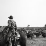 O'Haco Cattle Co by Scott Baxter_Ryan Gallery